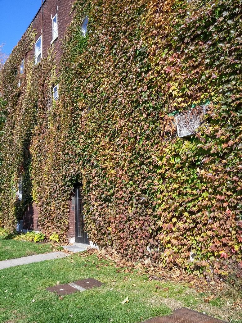 Appartement 1 Chambre a louer à Notre-Dame-de-Grâce a 2325-3405 Oxford - Photo 05 - TrouveUnAppart – L19485