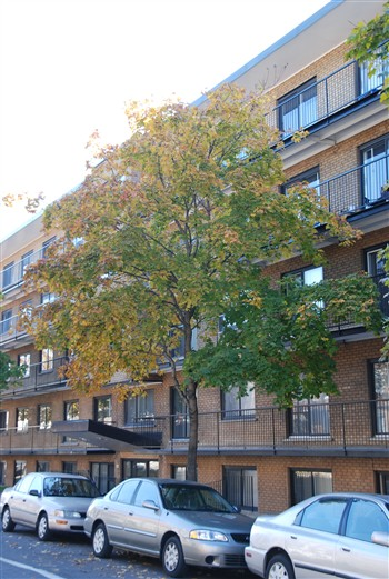 Appartement 2 Chambres [SIZE_FURNISHED_LUXURIOUS] a louer à Villeray a 7600 Lajeunesse - Photo 01 - TrouveUnAppart – L1847