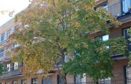 Appartement Studio / Bachelor a louer à Villeray a 7600 Lajeunesse - Photo 01 - TrouveUnAppart – L1846