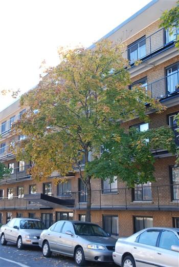 Appartement 1 Chambre a louer à Villeray a 7600 Lajeunesse - Photo 01 - TrouveUnAppart – L668